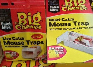 pest-control-mouse-traps