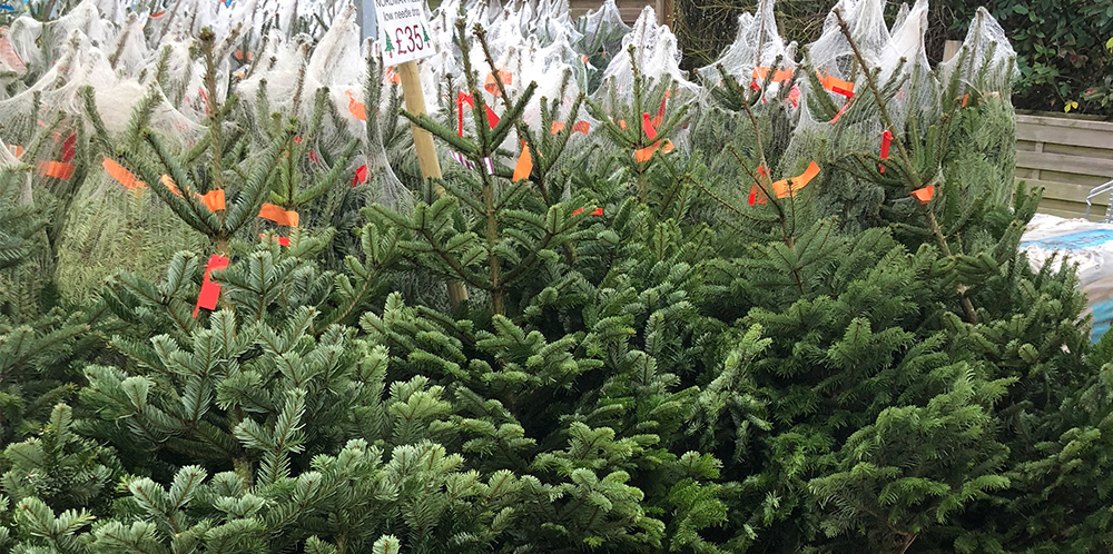 Xmas Trees Now In Stock!